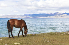 HORSE AT SONG KUL LAKE IN KYRGYZSTAN. This photo was taken on July, 2015 in Songkul lake, Kyrgyzstan. Song Kul is a high alpine lake in the Tian Shan Mountains stock image