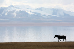 Horse in Song-Kul Lake Royalty Free Stock Photos