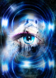 Horse in space and woman eye and circle light. Animal concept.       Winter effect and blue color. Royalty Free Stock Image