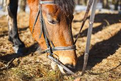 The horse in spring eats the first grass in the forest after snow royalty free stock photos