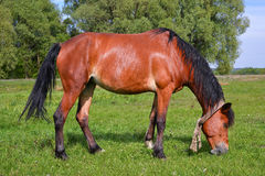 Horse on spring pasture Stock Image