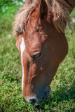 Horse in spring pasture Stock Photos