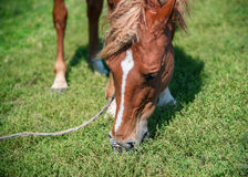 Horse in spring pasture Royalty Free Stock Images