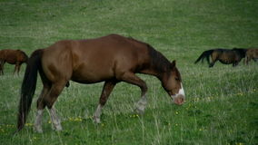 Horse on a Spring Pasture stock video
