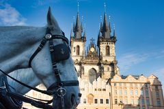 Horse on square royalty free stock images