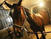 Horse in stable Stock Images