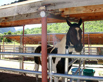 Horse in Stable. In mountain ranch Royalty Free Stock Photos