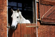 Horse in stable Stock Photos