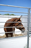 Horse in stable. Horse in the open-air stable with blue sky in the background Stock Image