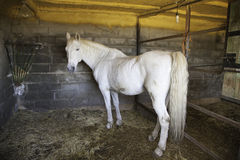 Horse in the stable Royalty Free Stock Image