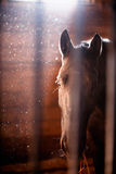 Horse in stable. A horse in a stable Stock Images