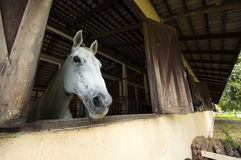 Horse at stable Royalty Free Stock Photos