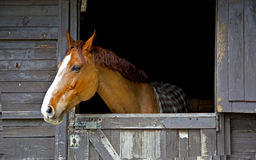 Horse snort Stock Photo