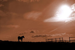 Horse and stable. In mountain Royalty Free Stock Photos