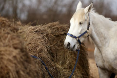 Horse in the stable Royalty Free Stock Photography