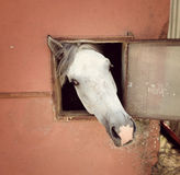 Horse in the stable Royalty Free Stock Photo