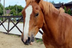 Horse in stable on a background of summer landscape stock image