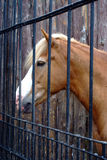 Horse in stable behind cage Stock Image