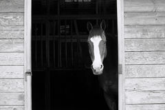A horse in the stable Stock Images