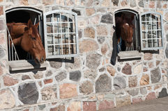 Horse stable Blue Hors Royalty Free Stock Image