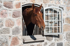 Horse stable Blue Hors Royalty Free Stock Photography