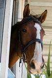 Horse at stable. Brown horse at stable Stock Image
