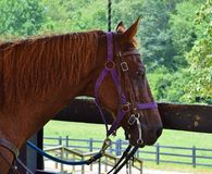 Horse in a Stable Royalty Free Stock Photography