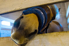 Horse in stable corral close up Royalty Free Stock Photo
