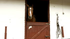 Horse in stable in countryside stock video