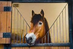 Draft horse in stable Stock Photography