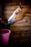 Horse at stable Stock Images