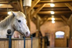 Horse in a stable on a farm in eastern Poland Royalty Free Stock Photos
