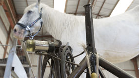 Horse in stable with farrier stand Royalty Free Stock Images