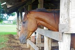 Horse in the stable Royalty Free Stock Images