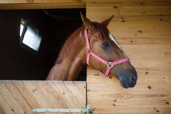 Horse in the stable Stock Photography