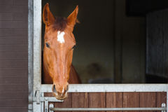 Horse in a stable Stock Images