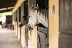 Horse, Stable, Horse Like Mammal, Horse Supplies Royalty Free Stock Images