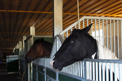 Horse stable Royalty Free Stock Photos