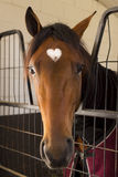Horse in a stable. Horse with love marking on forehead Stock Photo