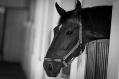 Horse. In stable Royalty Free Stock Photos