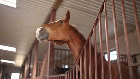 Horse in stable stock video