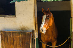 Horse Stable Portrait Stock Image