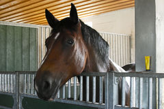 Horse stable Stock Images