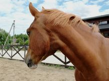 Horse in stable on a background of summer landscape royalty free stock images