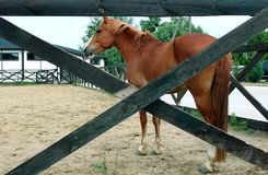 Horse in stable on a background of summer landscape royalty free stock photography
