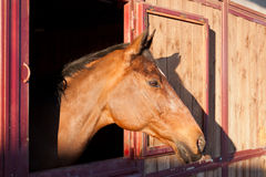 Horse in the stable Stock Image