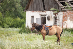 Horse at a stable in the village. The lonely horse stands at a stable outdoors Stock Photo