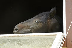 Horse in a stable window in the village Vladykino in Russia Stock Photography