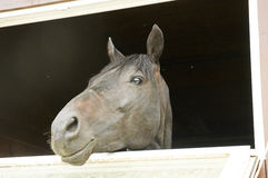 Horse in a stable window in the village Vladykino in Russia Royalty Free Stock Photo