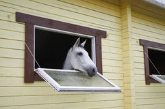 Horse in a stable window in the village Vladykino in Russia Royalty Free Stock Images